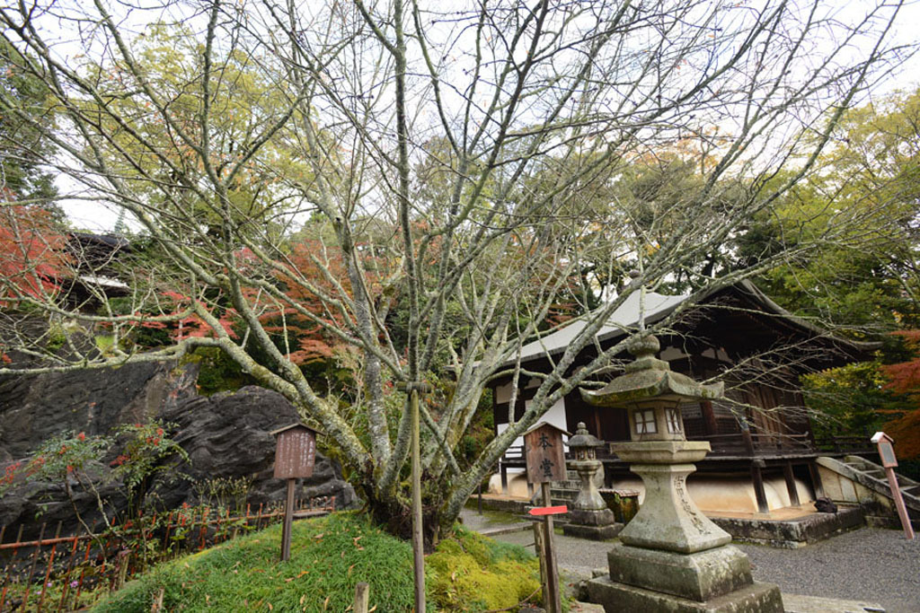 Rōben Tsuezakura